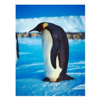 Pingüino solitario postal