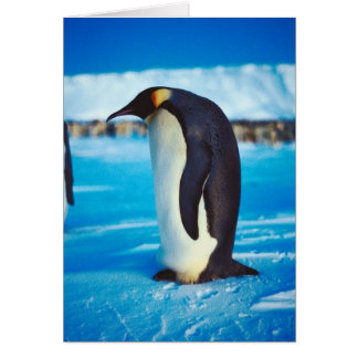 Pingüino solitario tarjetas