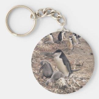 Pingüino y polluelos de Chinstrap Llavero Redondo Tipo Pin