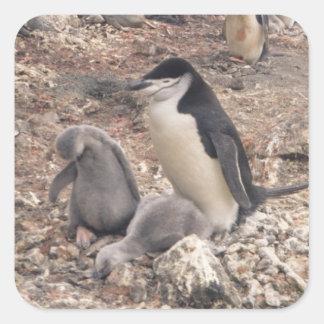 Pingüino y polluelos de Chinstrap Pegatina Cuadrada