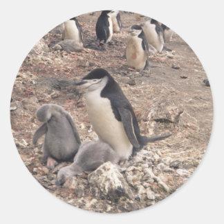 Pingüino y polluelos de Chinstrap Pegatina Redonda