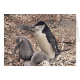 Pingüino y polluelos de Chinstrap Tarjeta De Felicitación