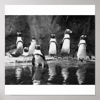 Pingüinos a montones póster