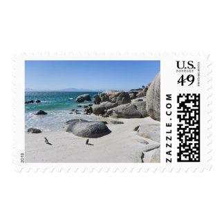 Pingüinos africanos, conocidos antes como Jackass Sello Postal