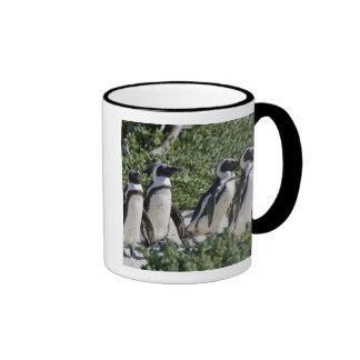 Pingüinos africanos, conocidos antes como Jackass Taza De Dos Colores