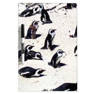 Pingüinos africanos en la playa de los cantos roda