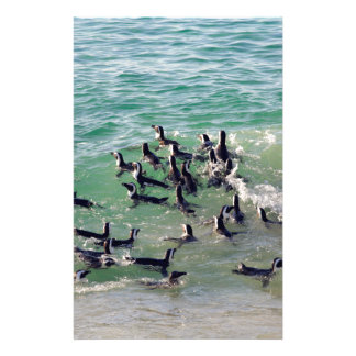 Pingüinos africanos que juegan en la resaca papeleria personalizada