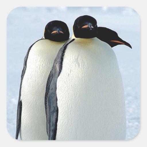 Pingüinos Calcomania Cuadradas Personalizada