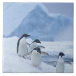 Pingüinos de Adelie (adeliae del Pygoscelis) en el Tejas Cerámicas