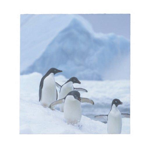 Pingüinos de Adelie (adeliae del Pygoscelis) en el Libretas Para Notas