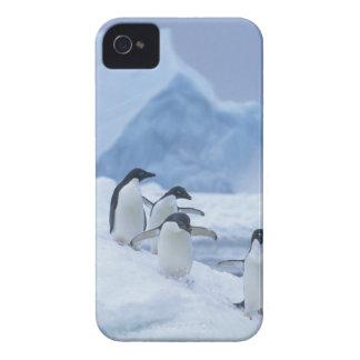 Pingüinos de Adelie (adeliae del Pygoscelis) en el Case-Mate iPhone 4 Protectores