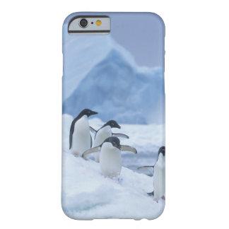 Pingüinos de Adelie (adeliae del Pygoscelis) en el Funda Para iPhone 6 Barely There