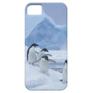Pingüinos de Adelie (adeliae del Pygoscelis) en el iPhone 5 Funda