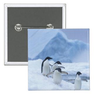 Pingüinos de Adelie (adeliae del Pygoscelis) en el Pin Cuadrada 5 Cm