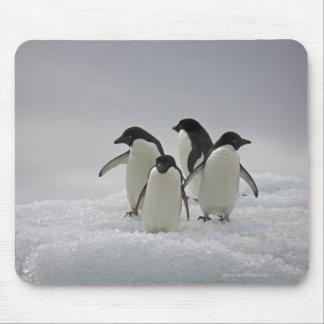 Pingüinos de Adelie en flujos del hielo Alfombrilla De Ratones