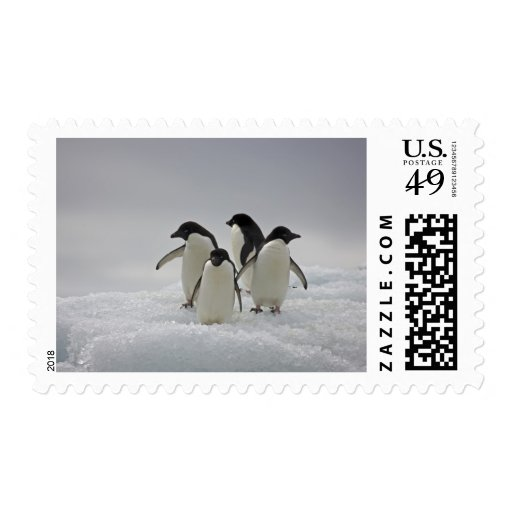 Pingüinos de Adelie en flujos del hielo Sellos
