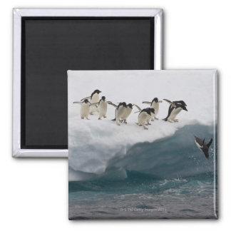 Pingüinos de Adelie que se zambullen en el mar Pau Imán Cuadrado