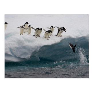 Pingüinos de Adelie que se zambullen en el mar Pau Postales