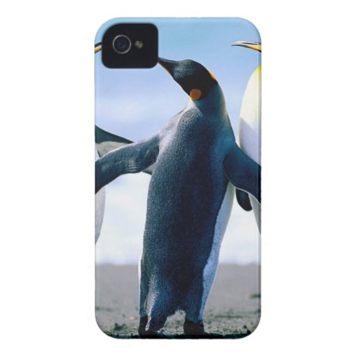 Pingüinos de Alaska iPhone 4 Protectores