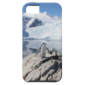 Pingüinos de Chinstrap en la Antártida iPhone 5 Carcasa