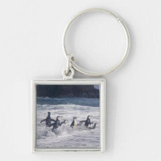 Pingüinos de Chinstrap en la resaca de la playa Llavero Cuadrado Plateado
