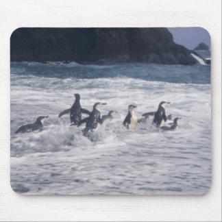 Pingüinos de Chinstrap en la resaca de la playa Mouse Pad