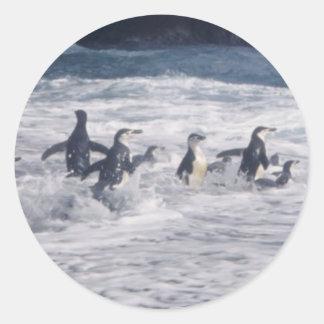 Pingüinos de Chinstrap en la resaca de la playa Pegatina Redonda