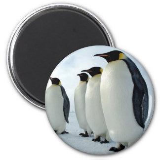 Pingüinos de emperador alineados imán redondo 5 cm
