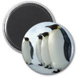 Pingüinos de emperador alineados imanes