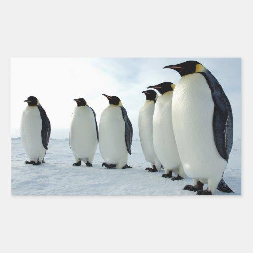 Pingüinos de emperador alineados rectangular pegatinas