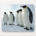 Pingüinos de emperador alineados alfombrilla de raton