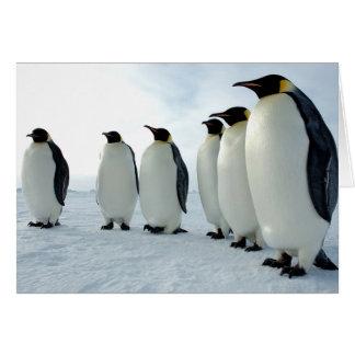 Pingüinos de emperador alineados tarjetón