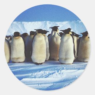 Pingüinos de emperador pegatina redonda