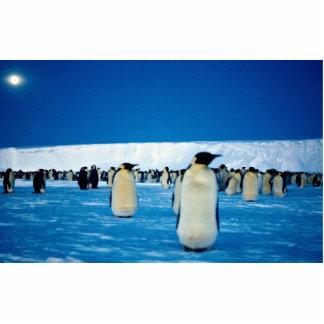Pingüinos de emperador por claro de luna, la fotoescultura vertical