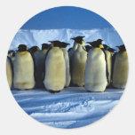 Pingüinos de emperador por claro de luna etiqueta redonda