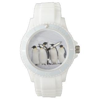 Pingüinos de emperador reloj de mano