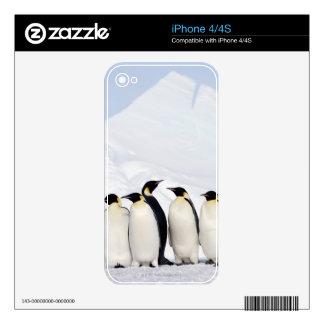 Pingüinos de emperador skins para iPhone 4