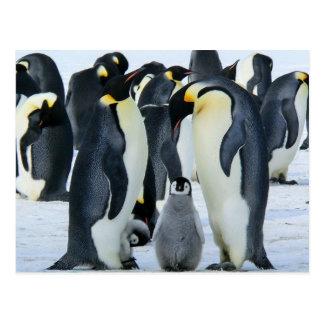 Pingüinos de emperador tarjetas postales