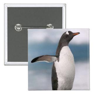 Pingüinos de Gentoo en línea de la playa rocosa co Pins