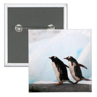 Pingüinos de Gentoo en línea de la playa rocosa co Pin