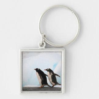 Pingüinos de Gentoo en línea de la playa rocosa co Llaveros