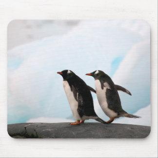 Pingüinos de Gentoo en línea de la playa rocosa co Mouse Pads