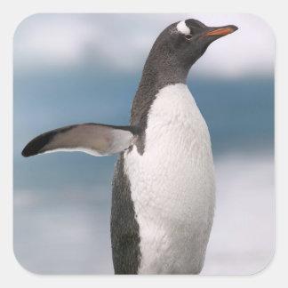 Pingüinos de Gentoo en línea de la playa rocosa co Pegatina Cuadradas