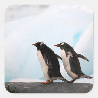 Pingüinos de Gentoo en línea de la playa rocosa co Calcomanía Cuadradas Personalizada