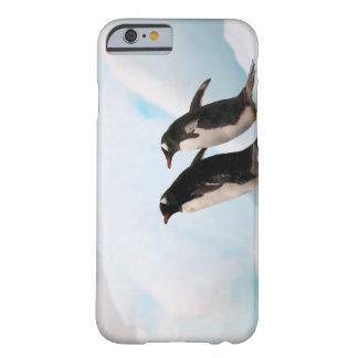 Pingüinos de Gentoo en línea de la playa rocosa Funda Para iPhone 6 Barely There