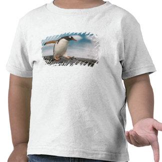 Pingüinos de Gentoo en línea de la playa rocosa Camisetas