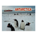 Pingüinos de Gentoo, península antártica Postal