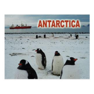 Pingüinos de Gentoo, península antártica Postales