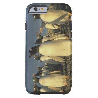 Pingüinos de Gentoo, (Pygoscelis Papua), Malvinas Funda De iPhone 6 Tough