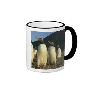 Pingüinos de Gentoo, Pygoscelis Papua), puesta del Taza De Dos Colores